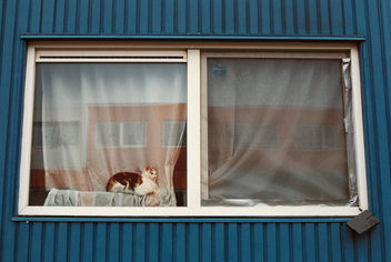 Window cat - Free image #283453