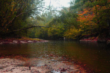 Kisatchie Bayou in the rain, Fall 2010 - image #284603 gratis