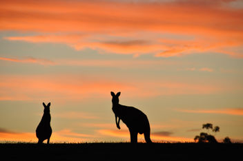 Aussie Silhouette - Free image #284883