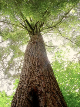Old-Growth Forest (2) - image gratuit #285153