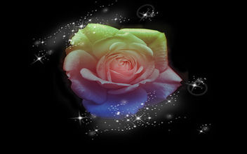 Gentle-Rose - image gratuit #285613