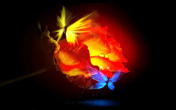 Ember-Rose-Butterfly-Love - Free image #285623