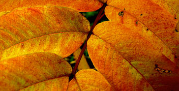 Yellow Leaves Queenswood Park Herefordshire #Dailyshoot Patterns - Free image #286053