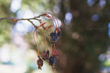 HBW - Dried Berries Edition - image gratuit #286263