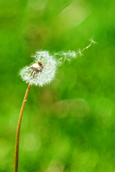 Blowing in the wind. - image #286333 gratis