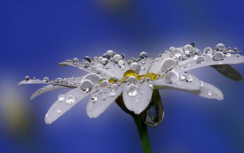 First Dew of the Morning - image gratuit #286553