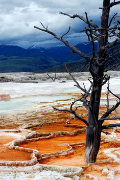 yellowstone tree. - Free image #286583