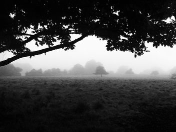 Morning Fog Emerging From Trees - image gratuit #286783