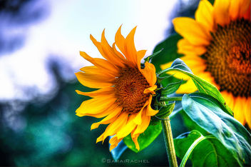 Facing The Sun - image gratuit #286833