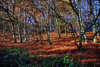 Autum colours, Reigate - Free image #287243