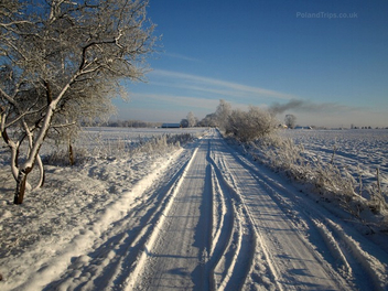 Frozen Country Lane - Free image #287293