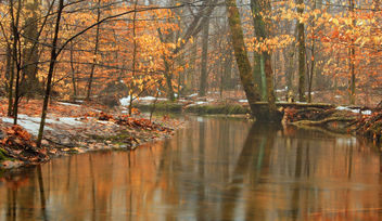 East Fork Martins Creek (1) - image gratuit #287463