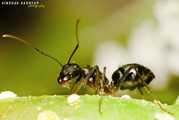 Sweet tooth - image #288093 gratis