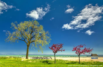Spring trees and beach on Lake Michigan - Kostenloses image #288393