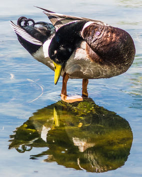 Who's that duck looking at me? - Free image #288463