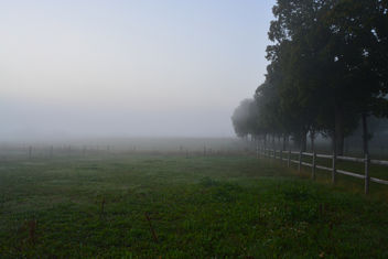 Morning fog - image gratuit #289293