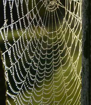Web of pearls - Free image #289333