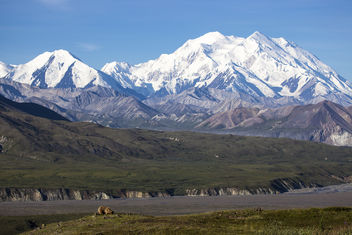 Bear Digging and Denali - Free image #290373