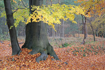 Autumn in the forest - image #290473 gratis