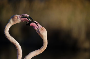 Flamant rose - Kostenloses image #290543