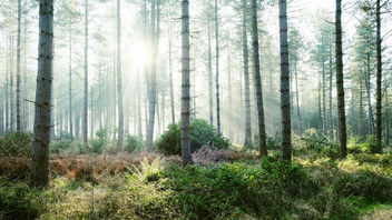 Forest Light Fuji X-T1 - image gratuit #291143