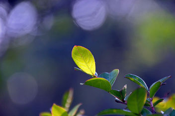 leaf in backlight - Free image #291763