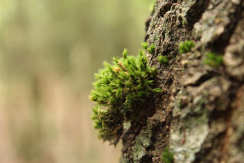 Moss on tree - Free image #294133