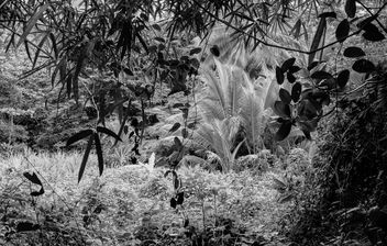 In the Jungle,... - Free image #294223