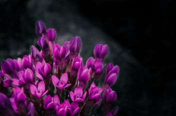 Purple flowers - image #295013 gratis
