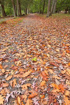 Deep Creek Autumn Path - HDR - Free image #295113