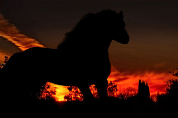 The horse and the sunset - image gratuit #296713
