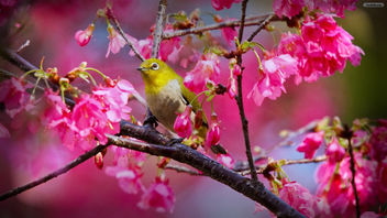Birds Sing in the Spring - Kostenloses image #296763