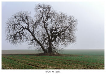 Tree in the mist - image gratuit #296803