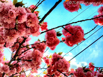 Spring in Jersey - image gratuit #298413