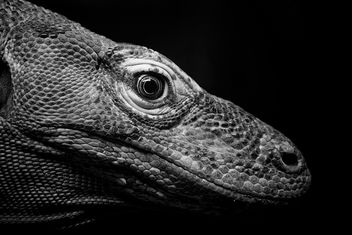 Komodo dragon | Bronx Zoo - бесплатный image #298963