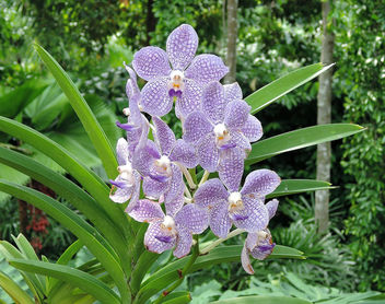 Singapore-National Orchid Garden 1 - image #299033 gratis