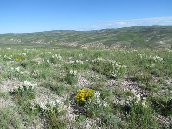 Southwest Wyoming sage-steppe habitat. - бесплатный image #299183