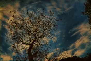 Tree reaching the clouds - Free image #299803