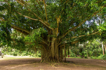 tree of life VI (Bali) - image gratuit #300393