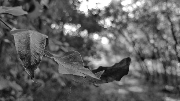 Nature in black and white - бесплатный image #300993