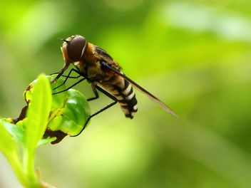 Insect on a plant - image gratuit #301413