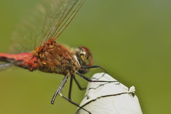 Dragonfly with beautifull wings - image gratuit #301643