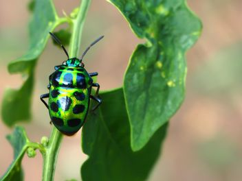 Green bug with black dots - Free image #301723
