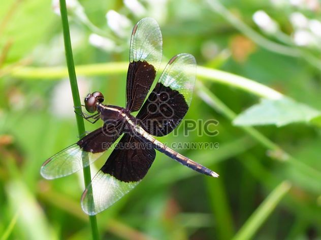Dragonfly with beautifull wings - Free image #301743