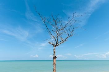 dead tree on the beach - image gratuit #303343