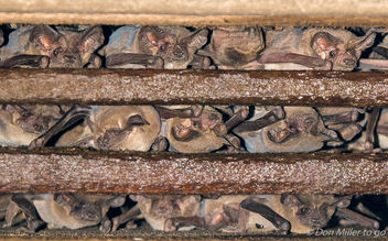 Bats, Bats and more Bats - Kostenloses image #303743