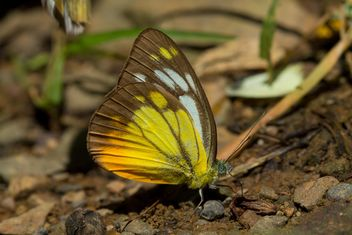 Colored butterfly on ground - image #303773 gratis