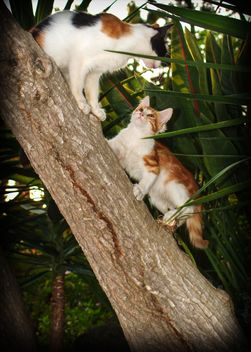 Two kitten on a tree - image #304053 gratis