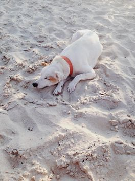 dog sleeping on the beach - бесплатный image #304103