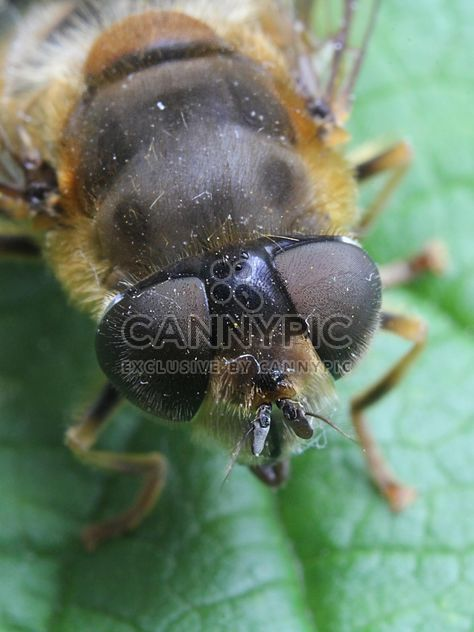 Insect on green leaf - Free image #304353